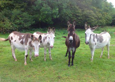 Ellen's Donkeys
